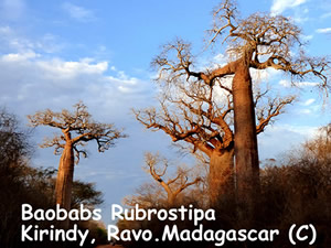 Madagascar, a wonderland for general naturalist and for nature lovers