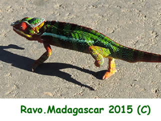 Madagascar, une destination nature, Photo Ravo.Madagascar