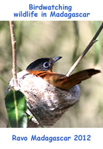 birdwatching wildlife in Madagascar
